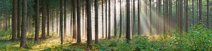 landscape_tree-strip-banner_700x170